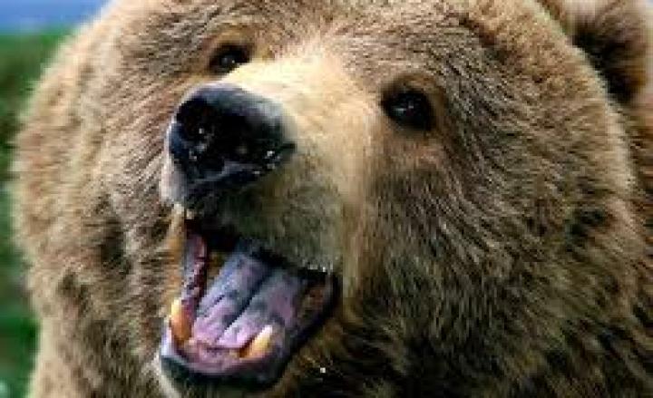 Trentino, orsa KJ2 abbattuta dalla Forestale: aveva aggredito un uomo