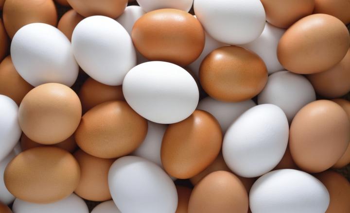 Uova contaminate, coinvolti 15 Paesi Ue: c'è pure l'Italia